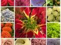 Assortie snijbloemen
